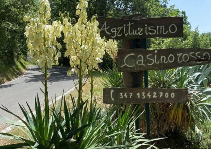 … il Casino Rosso … (AntonellaGiroldini)